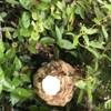 湖西市でスズメバチの巣を駆除してきました!