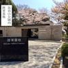 桜満開!比治山陸軍墓地
