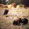 子どもが餓死する南スーダンと毎年4000万人分を食糧廃棄する日本(世界と日本の食糧問題)