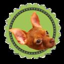 犬大好き!犬と生活するブログ。