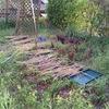 庭木を切って防草シートを引く
