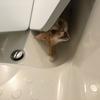 お風呂でかくれんぼ