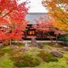 京都・東山 - 京都の秋 最後を彩る建仁寺 潮音庭