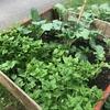 ケベックで家庭菜園始めました!その1