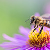 【ダイエット】蜂蜜はOK?蜂蜜のダイエット効果!?