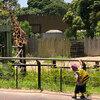 自閉症児も楽しめる!!動物園の過ごし方