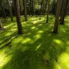 奈良の絶景スポット。世界遺産の唐招提寺の苔がめちゃめちゃ映えスポットだったわ。