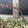そろそろ、桜🌸咲き始めますよ〜