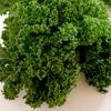 【緑黄野菜の王様「ケール」】ソテーしてサラダに