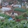 農園で野菜を育てる父親