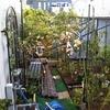 台風24号、ぶどう棚が壊れたり庭の樹木にちょっと被害がありました