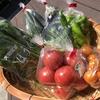 夏野菜のご紹介です