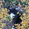 二子玉川公園下でネコ電波を受信する