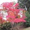 須磨離宮公園の紅葉②観光36R...過去20161120神戸