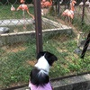 岡山出向 記録⑥ 〜池田動物園 ほか〜