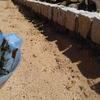 西洋芝の種まきの準備 草、石取り