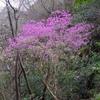 近所の山で見られた木に咲く花たち、3月23-24日