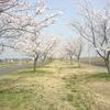 未来の桜の名所20180329