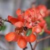 秋の日差しと庭の花 それはいと儚く