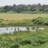 池間湿原(沖縄県宮古島)