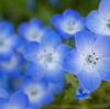 散歩しながら近所の花を撮る「花撮り散歩写真」 #EOSM6