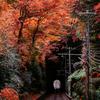 まさに見頃!紅葉を見に大混雑の高尾山へ行ってきました !