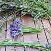 ラベンダーの花束と挿し木