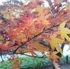 都心にある小石川後楽園で美しい紅葉を満喫!