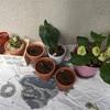 暖かくなったので、植物を適所に移動させる