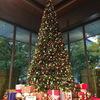 丸の内のクリスマスツリーたち