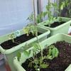 我が家の家庭菜園2020始動