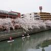 桜クエスト11(大岡川2)