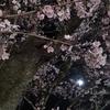 人生初の夜桜