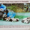 パンダがごろごろ…💕(๑>△<๑)💕