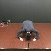 【遊戯王デッキ感謝祭】遊戯王ブロガーシナが使っているデッキを全公開!!ビートダウンから脳筋デッキも!!