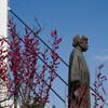 例年より早い開花の福井市中央公園の梅