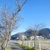 桜が咲く「庄川町」