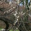 こんな時は花でも愛でましょう〜神代植物公園、京王百草園の早春の花。