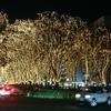 仙台 定禅寺通り 光のページェント