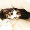 本当にお値段以上?ニトリの毛布は温かいか検証。 ニトリの吸湿発熱毛布Nウォームスーパー