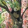 中国(北京)へ行ってみました「7️⃣北京動物園」