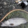 番頭日記20140618 渓流釣りに行ってきました。