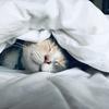 あと3分だけ… 朝スッキリ起きるための3つのコツ