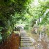 源兵衛川を散策して、桜家でうなぎランチを食べました【三島旅行記1】