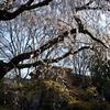 桜咲く季節に今熊野観音寺と中宮定子眠る鳥戸野陵を訪ねてみた