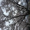 buruyama0327's blog
