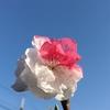 これ なんの花⁉︎ 紅白入り乱れがなんとも♪