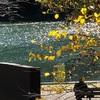 後姿探検隊、秋の公園をゆく。深呼吸学部の授業「吉本隆明と林雄二郎」