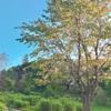地球の美しさを味わう時間〜北海道の秋