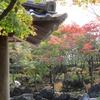 【紅葉を訪ねて】 「大磯城山公園 旧三井別邸地区」 ~悠久の歴史と自然・文化~